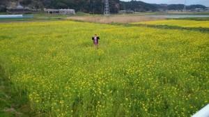 高山田の菜の花畑②