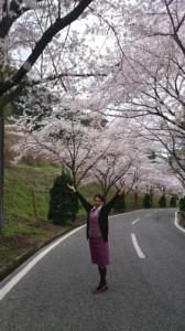 大上カントリーの桜
